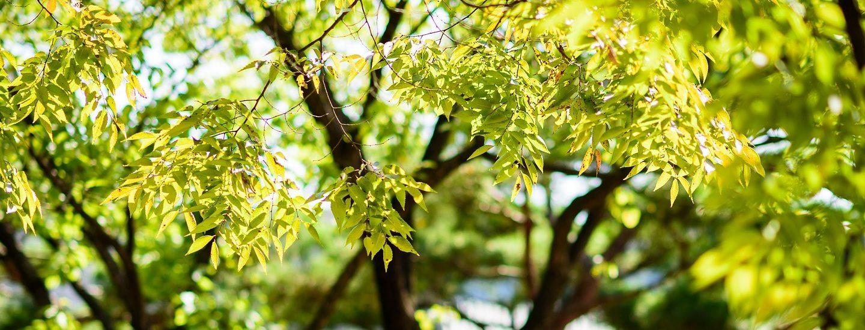 Et træ i haven