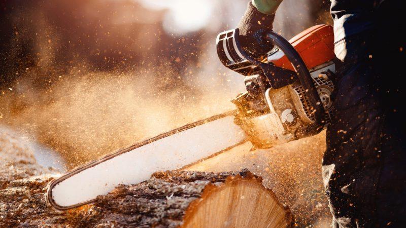 En træfælder der beskærer træer med en motorsav