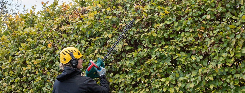 Hækklipning i Birkerød - den klarer HomeBob