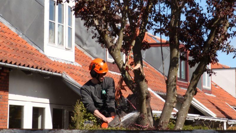 Beskæring af træer hos private