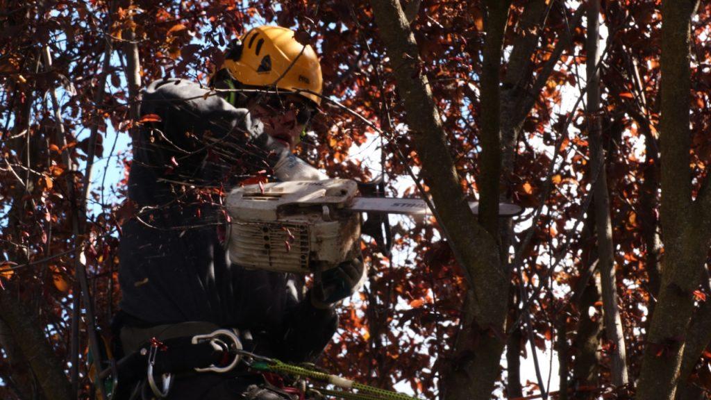 Guide til beskæring af træer
