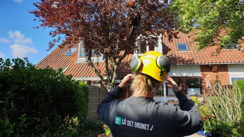 Rådgivning om beskæring af træer