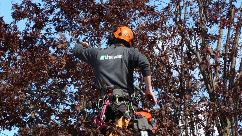 Træbeskæring med klatreteknik