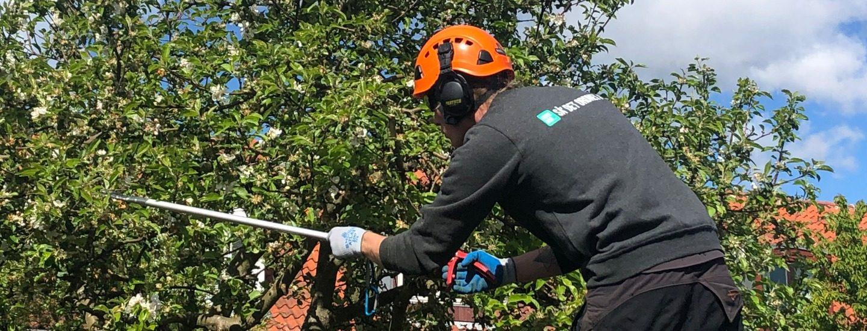 HomeBob gør dig klogere på priser på beskæring af træ