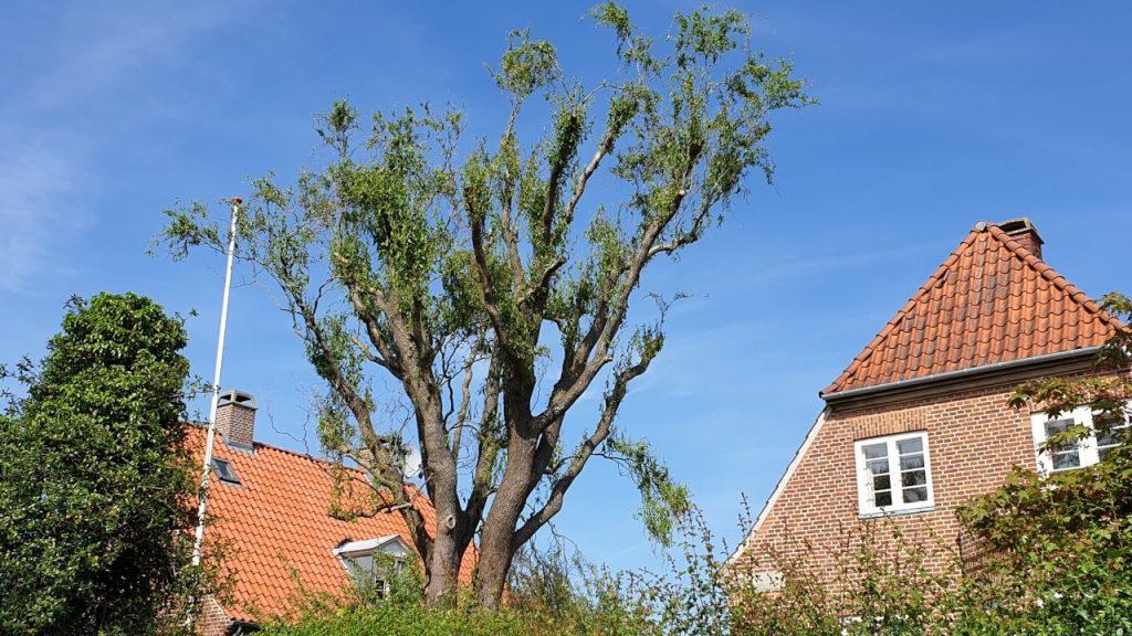 Stynet træ i have