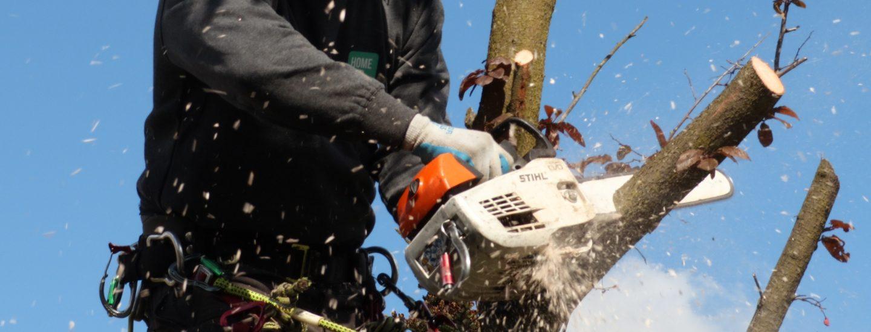 Prisen på træfældning afhænger af mange ting som HomeBob gør dig klogere på