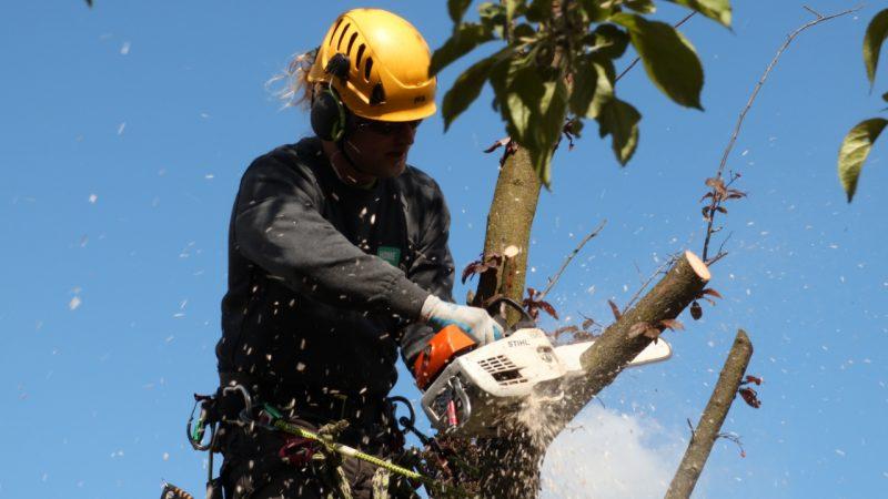 Bliv klogere på træfældning priser